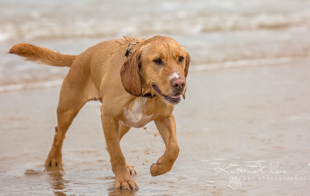 Katrina Wilson Dog Photography Bedfordshire Top 10 New Year Resolutions you should make with your dog-1-2