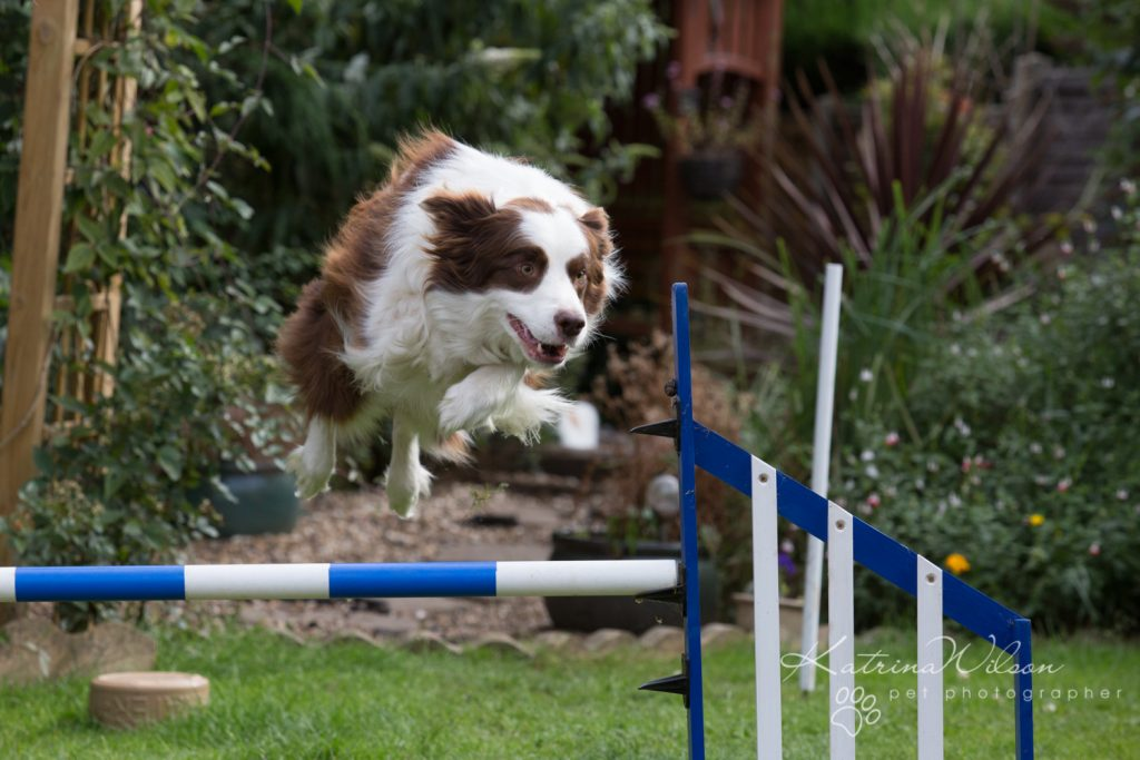 Katrina Wilson Dog Photography Bedfordshire Top 10 New Year Resolutions you should make with your dog-1-3