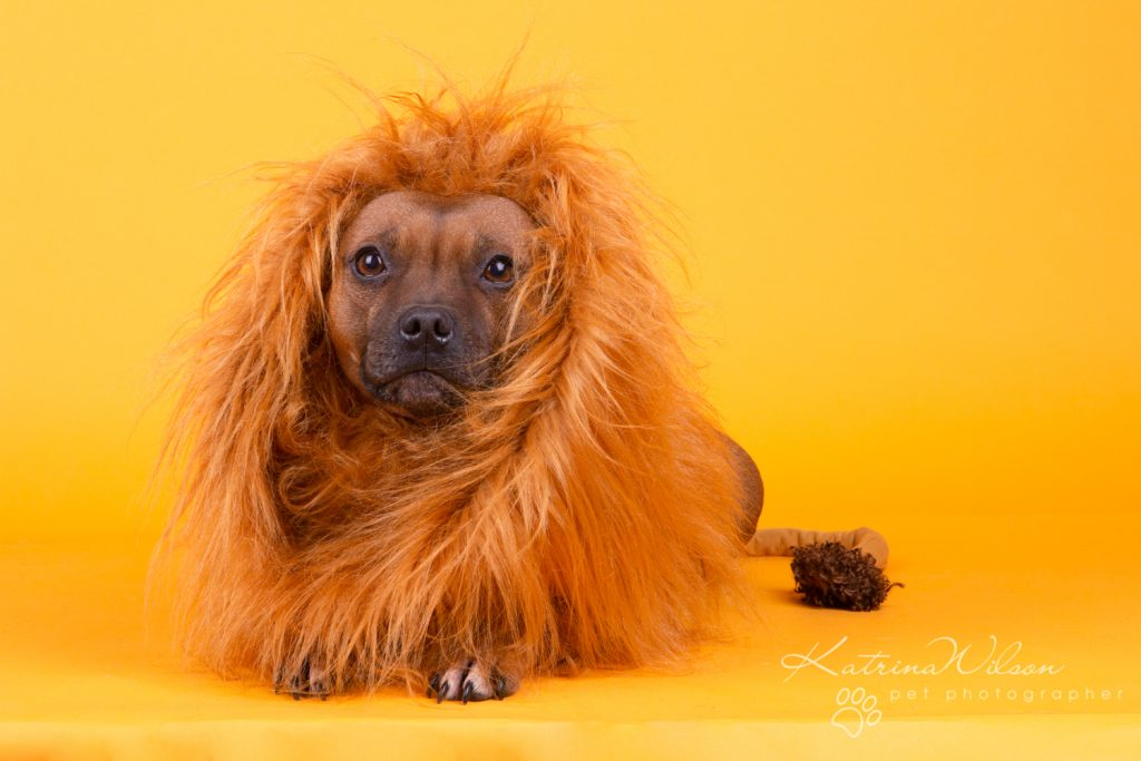 Katrina Wilson Dog Photography Bedfordshire Top 10 New Year Resolutions you should make with your dog-1-7