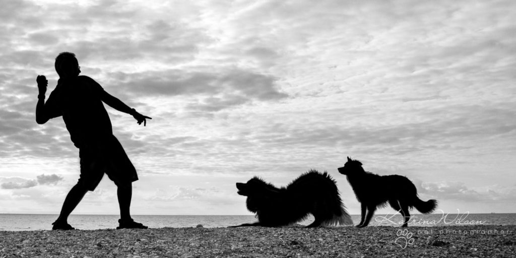 Katrina Wilson Dog Photography Bedfordshire Top 10 New Year Resolutions you should make with your dog-2-2
