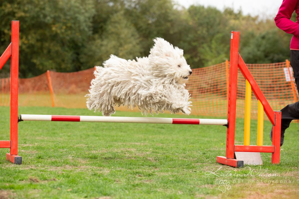 Katrina Wilson Dog Photography Bedfordshire Top 10 New Year Resolutions you should make with your dog-2-3