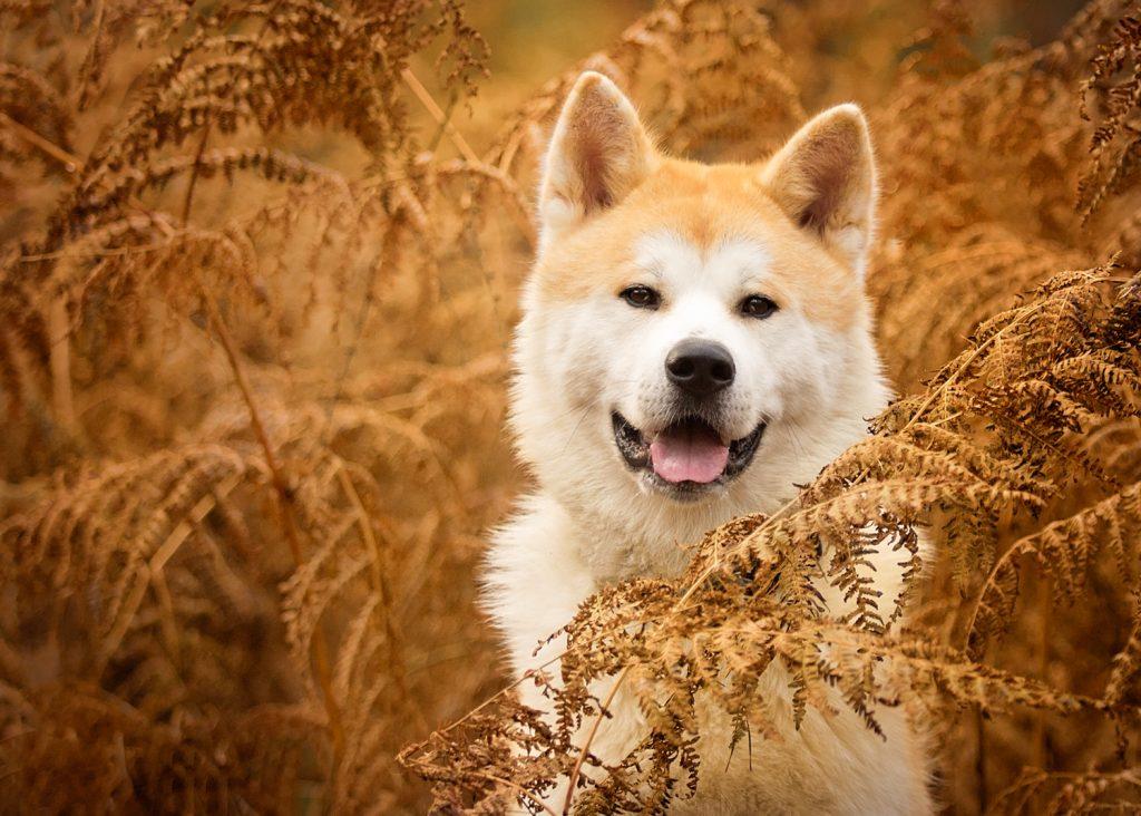 Guild of Photographers - Katrina Wilson Dog Photographer Bedfordshire -1