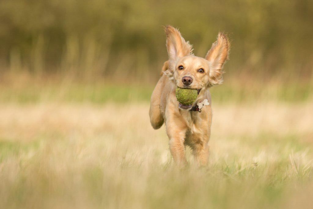 Guild of Photographers - Katrina Wilson Dog Photographer Bedfordshire -2-3