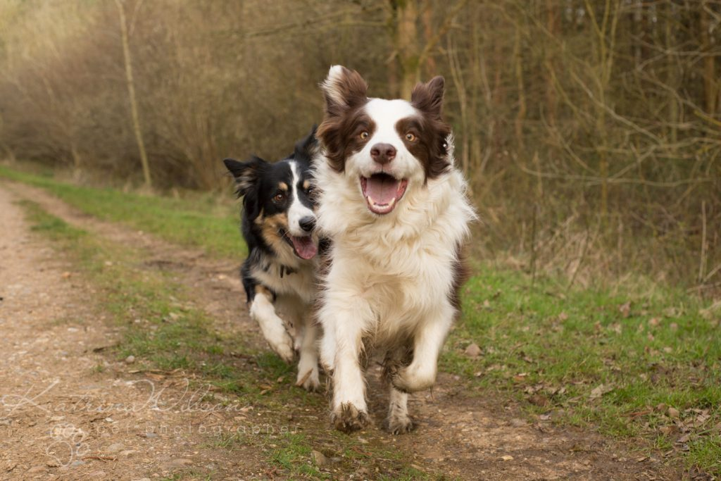 10 things my dog has taught me - Border Collie - Katrina Wilson Dog Photography Bedfordshire-10
