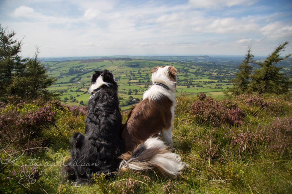10 things my dog has taught me - Border Collie - Katrina Wilson Dog Photography Bedfordshire