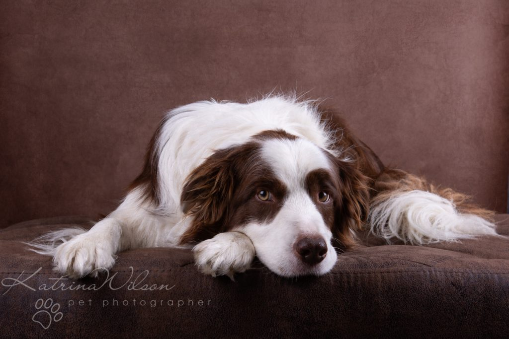 10 things my dog has taught me - Border Collie - Katrina Wilson Dog Photography Bedfordshire-11