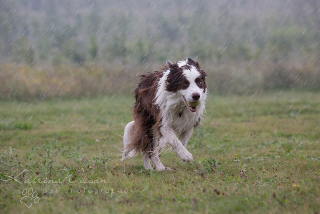 10 things my dog has taught me - Border Collie - Katrina Wilson Dog Photography Bedfordshire-3