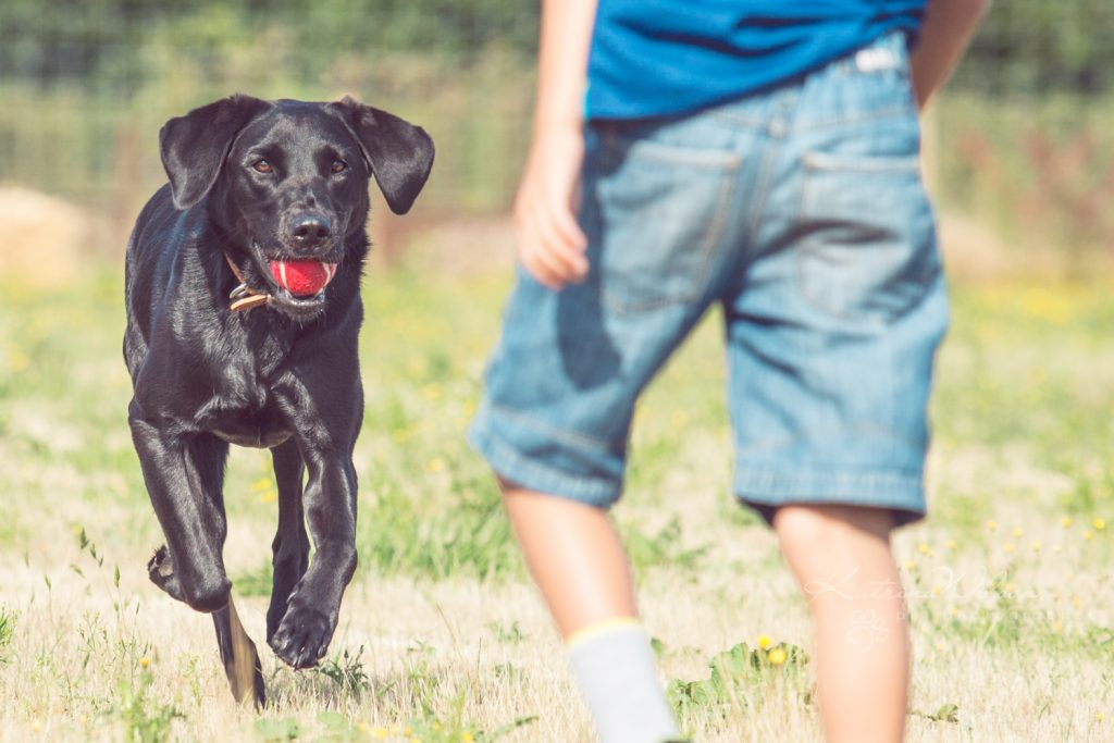 How dogs improve your mental health - Katrina Wilson Dog Photographer Bedfordshire