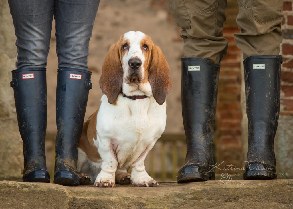 How dogs improve your mental health - Katrina Wilson Dog Photographer Bedfordshire-11