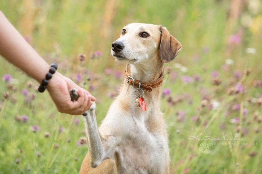 How dogs improve your mental health - Katrina Wilson Dog Photographer Bedfordshire-13