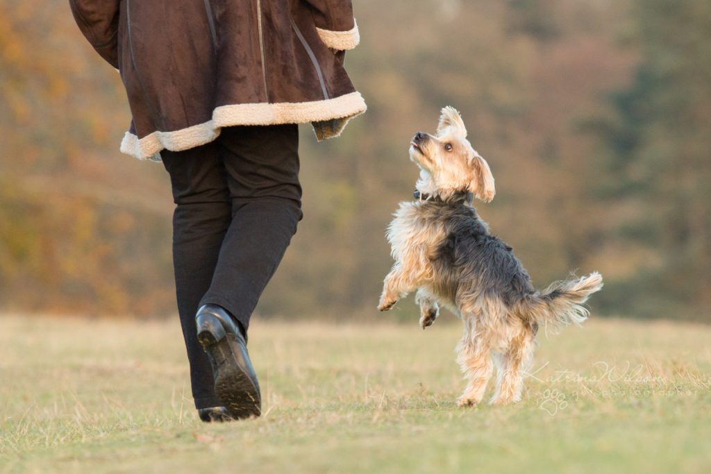 How dogs improve your mental health - Katrina Wilson Dog Photographer Bedfordshire-7