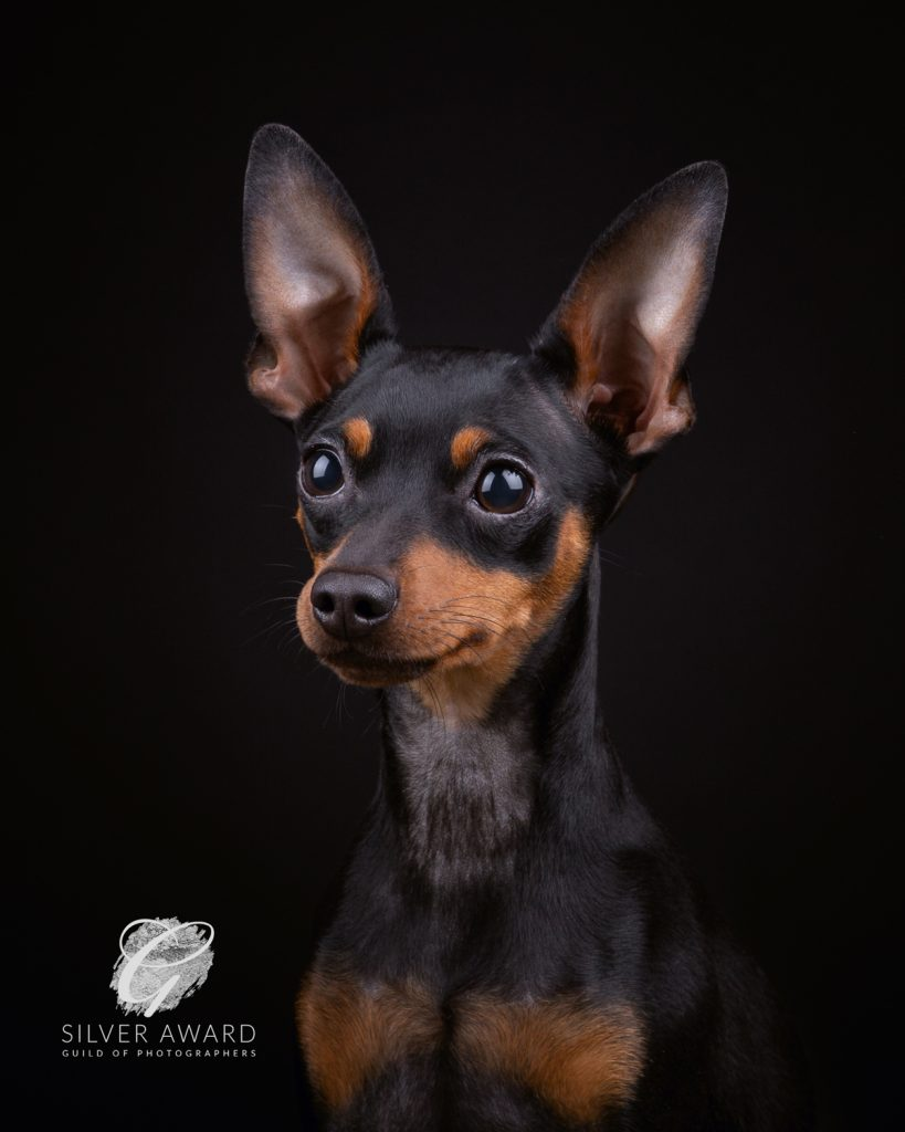 Guild of Photographers - Katrina Wilson Dog Photography Bedfordshire-10
