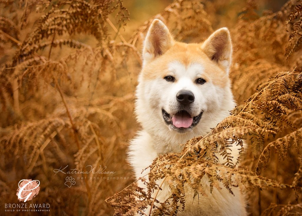 Guild of Photographers - Katrina Wilson Dog Photography Bedfordshire-3