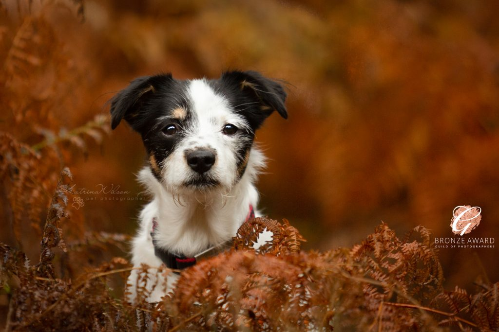 Guild of Photographers - Katrina Wilson Dog Photography Bedfordshire-4