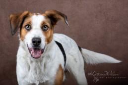 Benji - Rescue Dog Photo Session - Katrina Wilson Dog Photography Bedfordshire-1