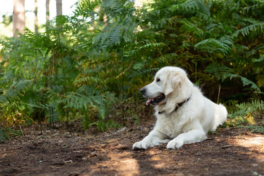 plants that are toxic to dogs-1-2