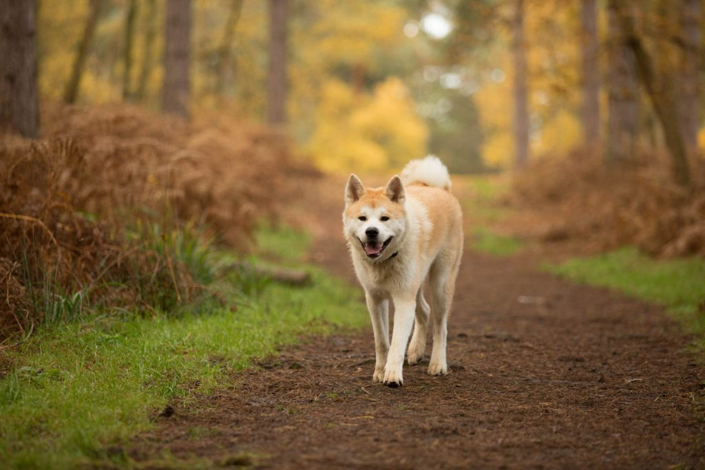 plants that are toxic to dogs-3