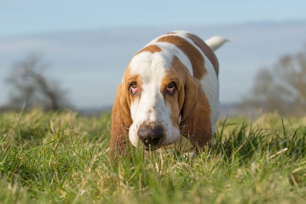 plants that are toxic to dogs-4