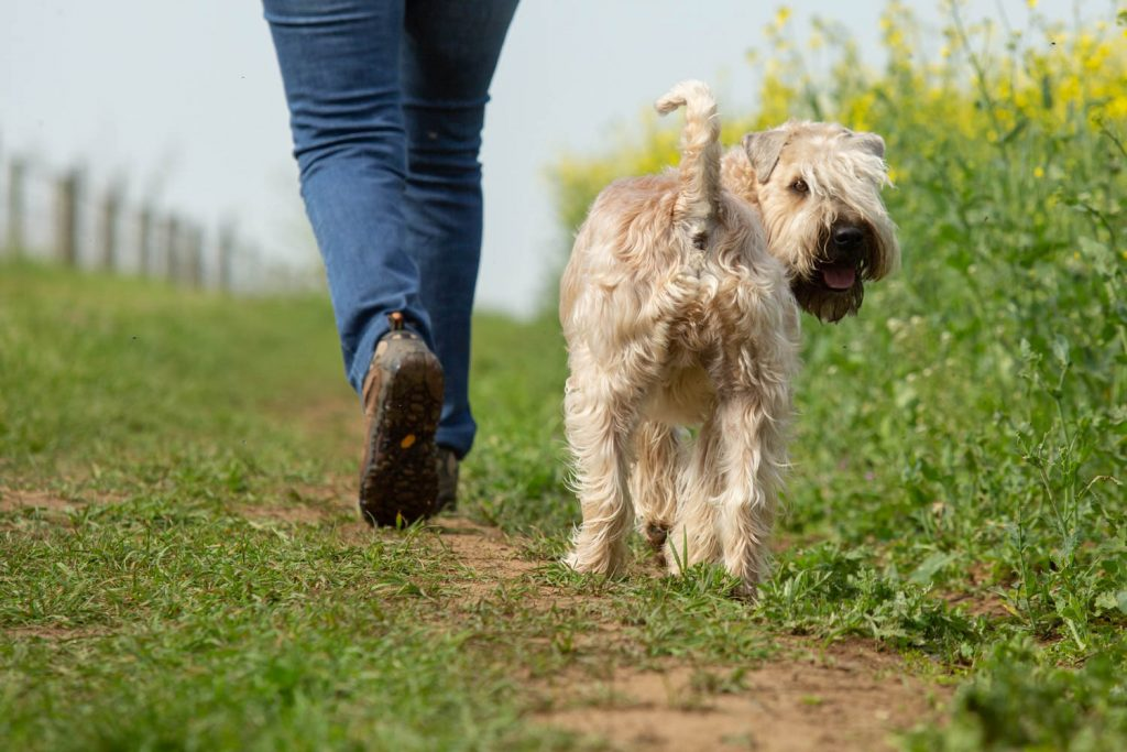 plants that are toxic to dogs-6