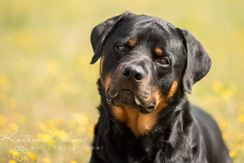 National Black Dog Day - Katrina Wilson Dog Photography-1