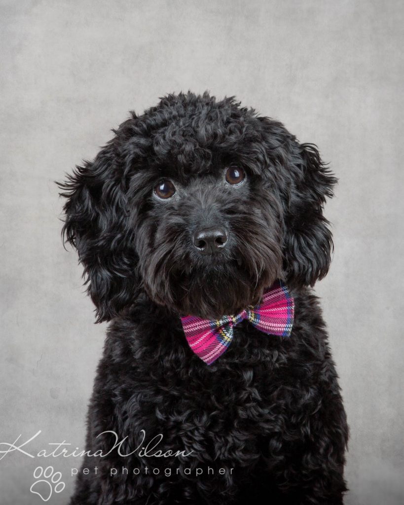 National Black Dog Day - Katrina Wilson Dog Photography-11