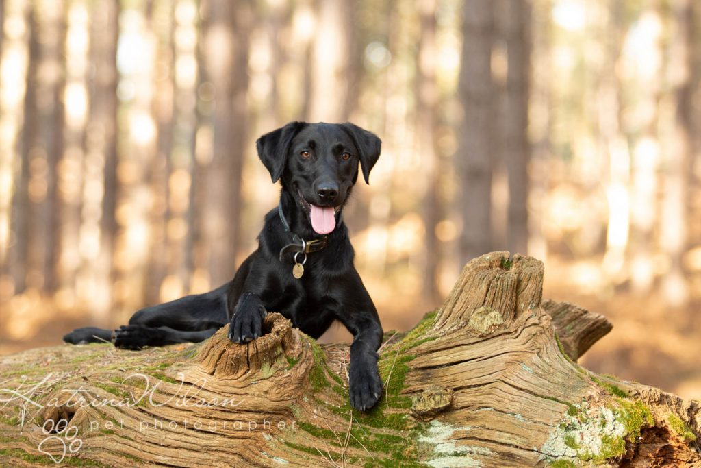 National Black Dog Day - Katrina Wilson Dog Photography-13