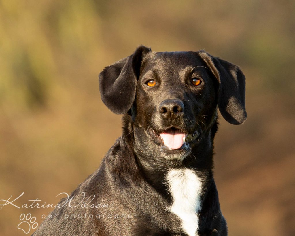 National Black Dog Day - Katrina Wilson Dog Photography-15