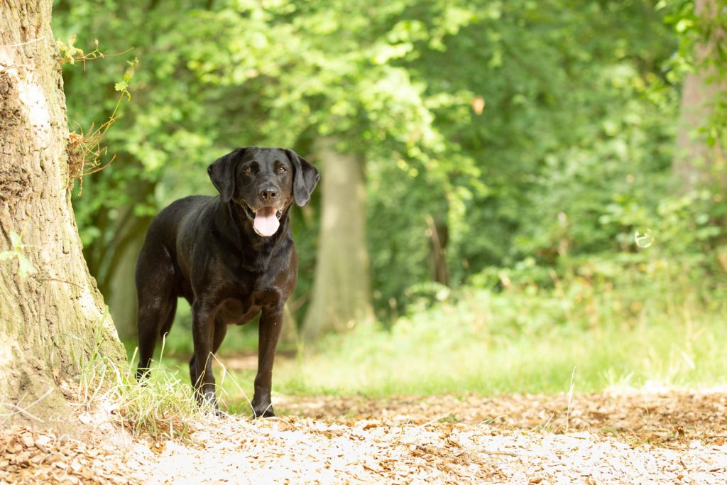 National Black Dog Day - Katrina Wilson Dog Photography-18