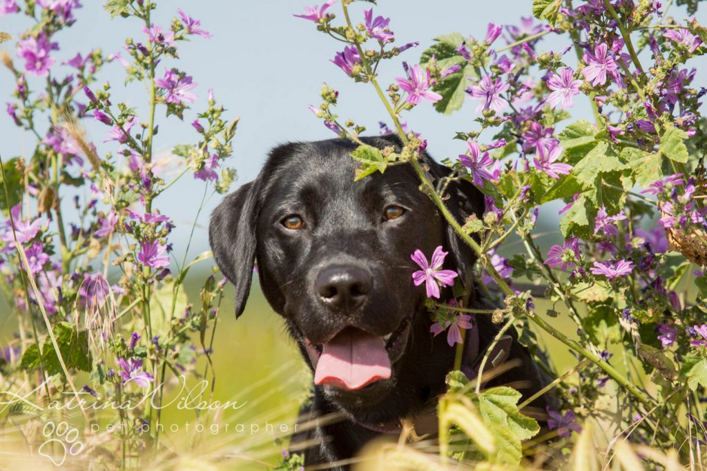 National Black Dog Day - Katrina Wilson Dog Photography-4