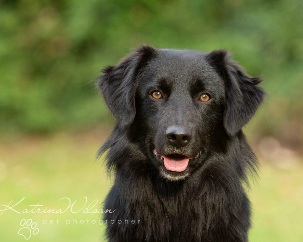 National Black Dog Day - Katrina Wilson Dog Photography-7