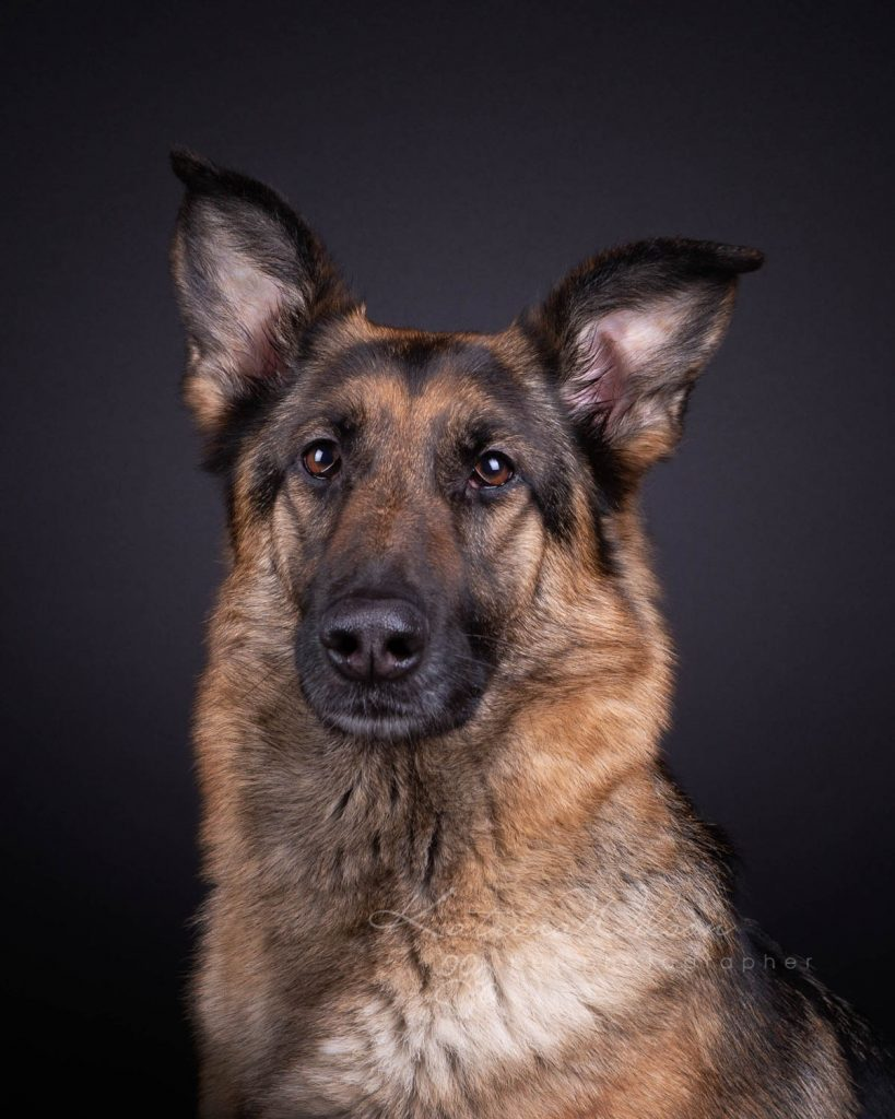 Award Winning Dog photographer Bedfordshire - Katrina Wilson-10