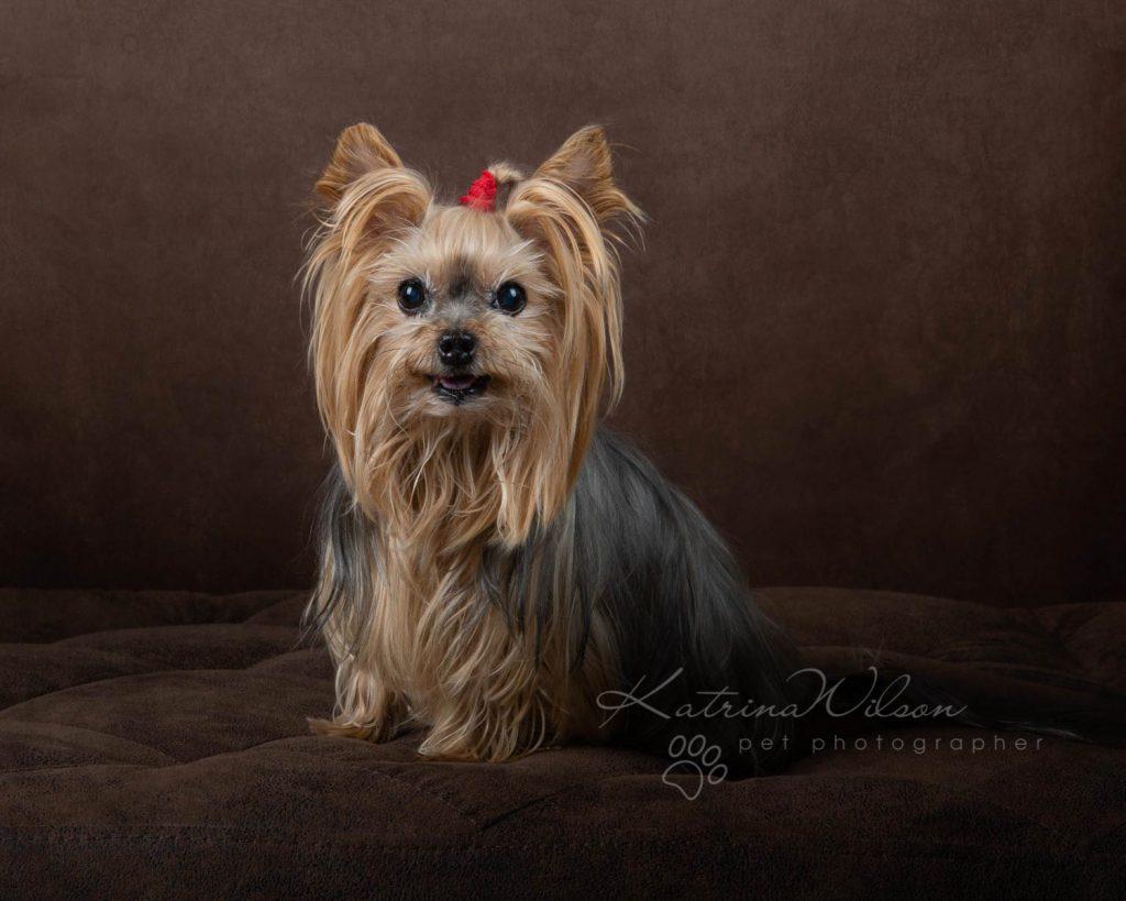 Award Winning Dog photographer Bedfordshire - Katrina Wilson-14