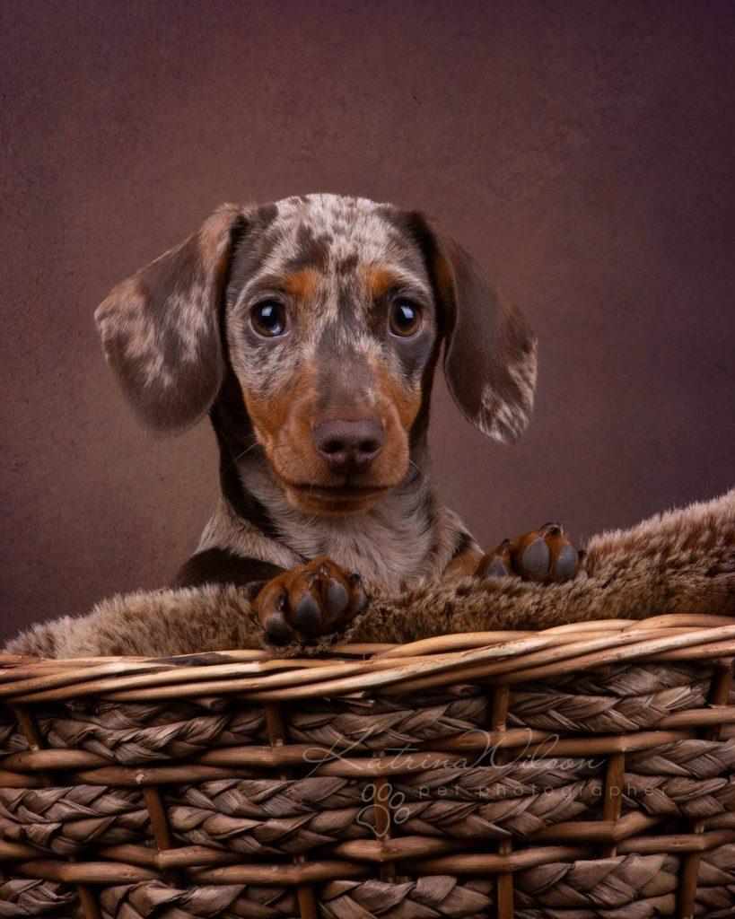 Award Winning Dog photographer Bedfordshire - Katrina Wilson-16