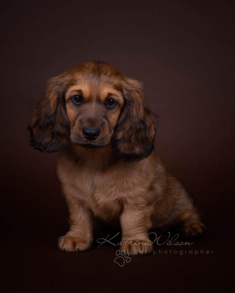 Award Winning Dog photographer Bedfordshire - Katrina Wilson-18