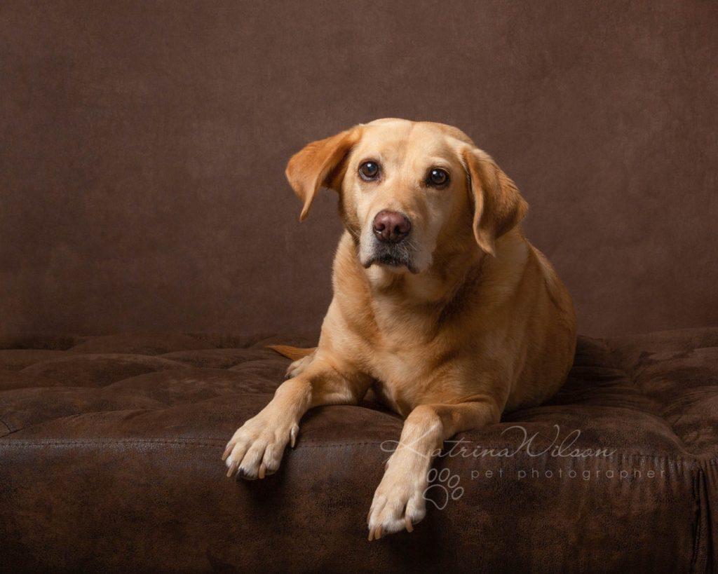 Award Winning Dog photographer Bedfordshire - Katrina Wilson-19