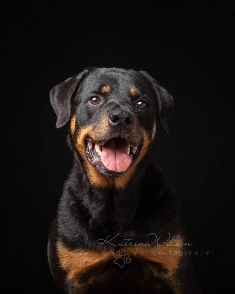 Award Winning Dog photographer Bedfordshire - Katrina Wilson-20