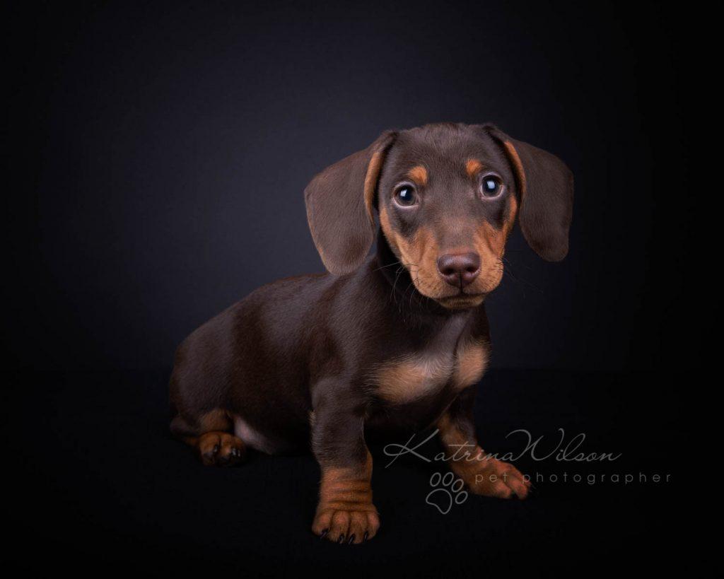 Award Winning Dog photographer Bedfordshire - Katrina Wilson-4