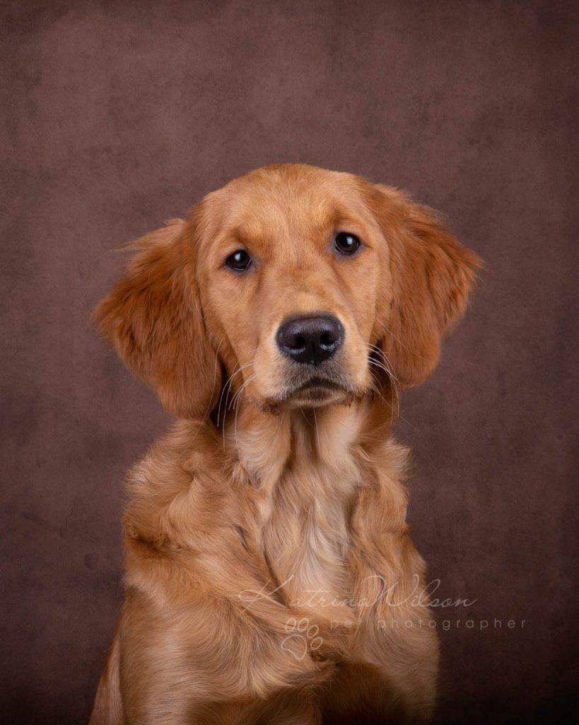 Award Winning Dog photographer Bedfordshire - Katrina Wilson-6