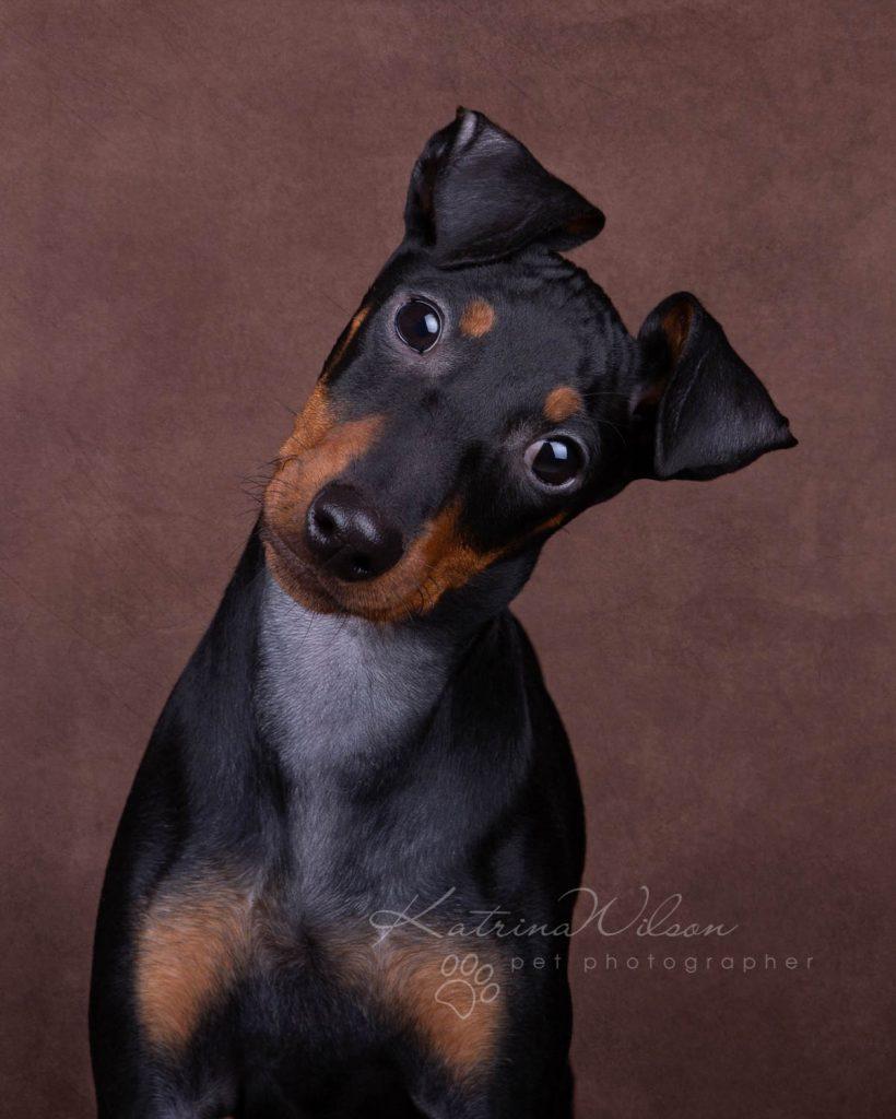 Award Winning Dog photographer Bedfordshire - Katrina Wilson