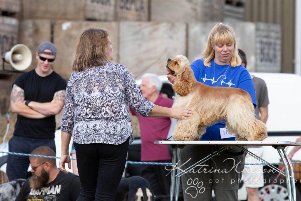 Companion dog show cute dog-23