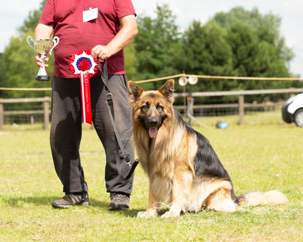 Companion dog show cute dog - Katrina Wilson Pet Photographer Bedfordshire-13