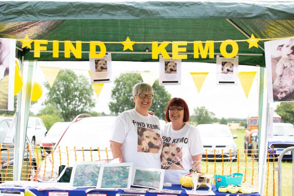 Companion dog show cute dog - Katrina Wilson Pet Photographer Bedfordshire-14
