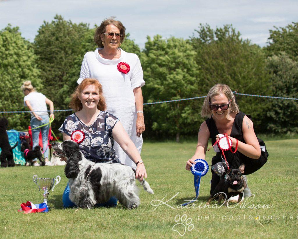 Companion dog show cute dog - Katrina Wilson Pet Photographer Bedfordshire-2