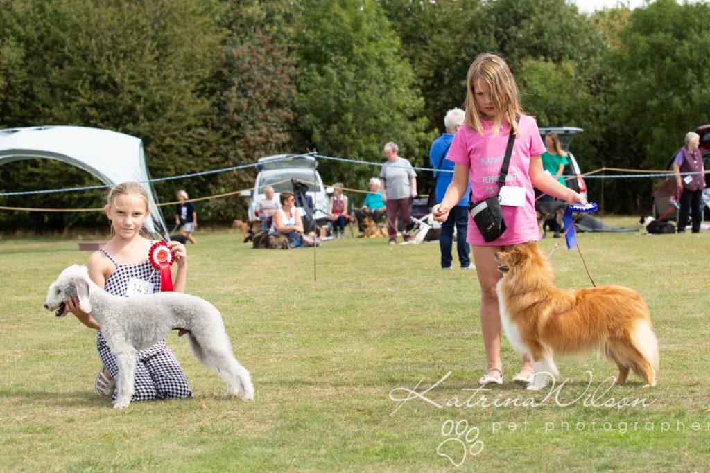Companion dog show cute dog - Katrina Wilson Pet Photographer Bedfordshire-24