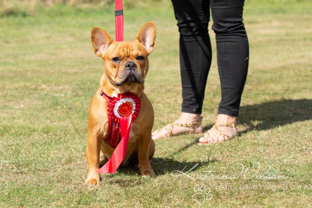 Companion dog show cute dog - Katrina Wilson Pet Photographer Bedfordshire-26
