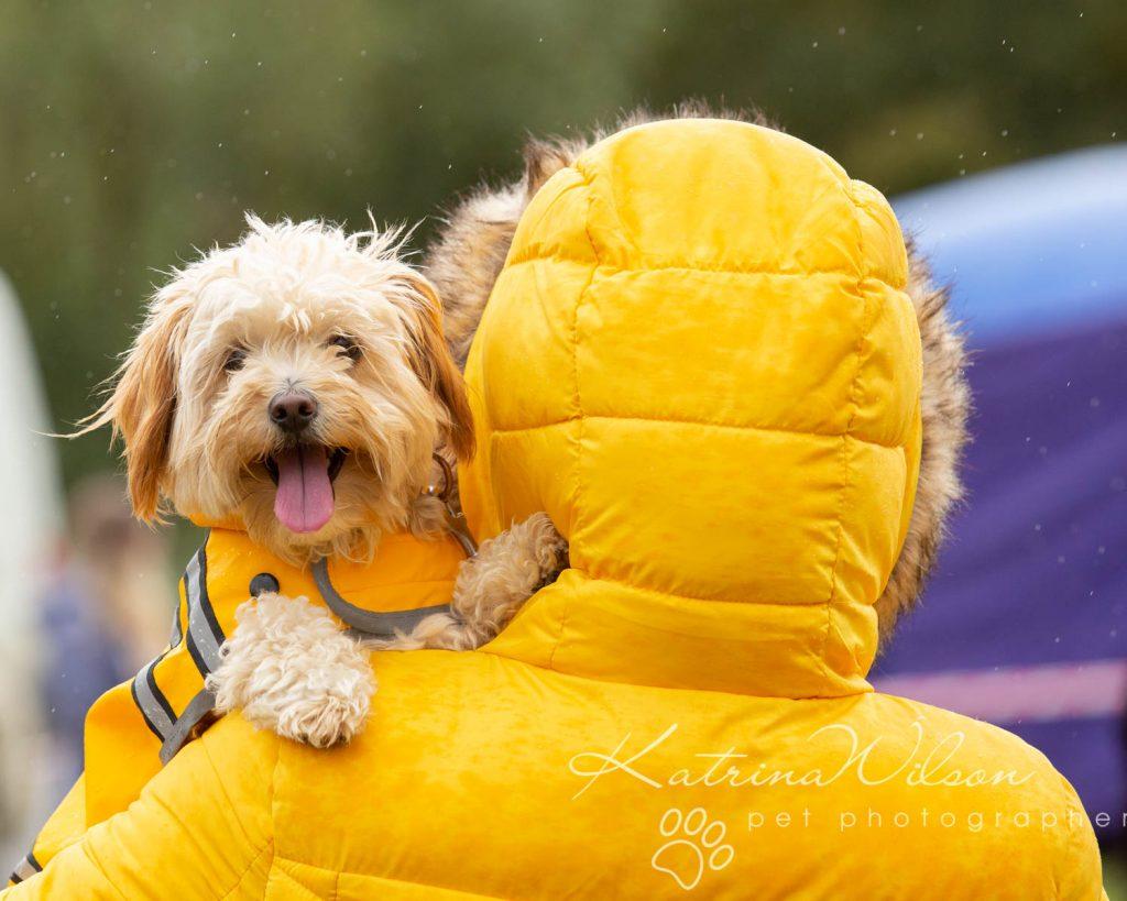 Companion dog show cute dog - Katrina Wilson Pet Photographer Bedfordshire-28