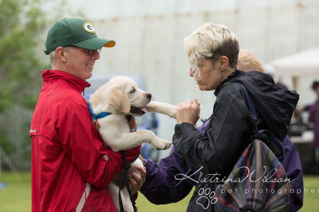 Companion dog show cute dog - Katrina Wilson Pet Photographer Bedfordshire-3