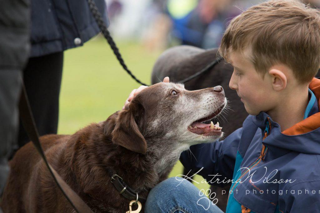 Companion dog show cute dog - Katrina Wilson Pet Photographer Bedfordshire-5