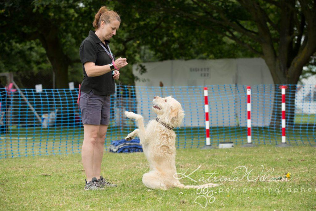 Companion dog show cute dog - Katrina Wilson Pet Photographer Bedfordshire-9