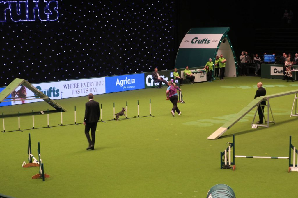Crufts 2020 - Agility Katrina Wilson Dog Photography